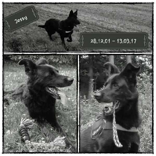 Gedenkseite Online Tierfriedhof Virtueller Tierfriedhof Hund Jessy